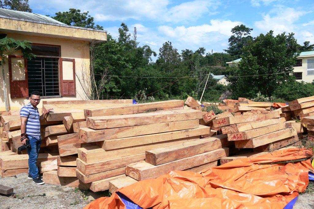 Thị trường gỗ pơ mu việt nam