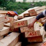 Dấu hiệu nhận biết gỗ pơ mu