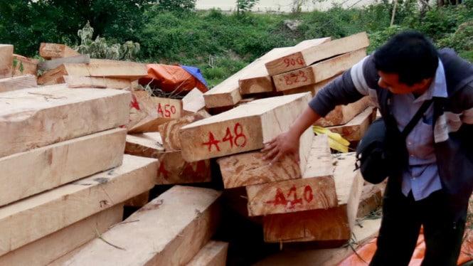 Dấu hiệu nhận biết gỗ pơ mu, Cách lựa chọn gỗ pơ mu tốt 1