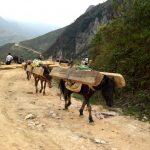 Nguồn gốc gỗ Pơ Mu, đặc tính của gỗ pơ mu như thế nào?