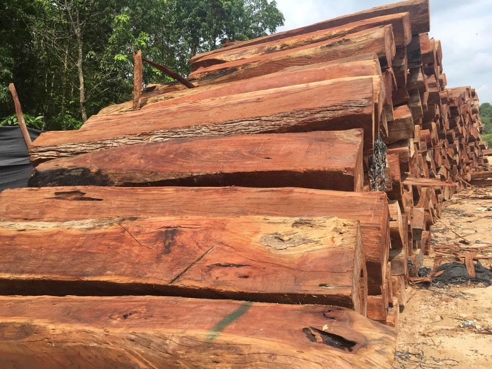 Nguồn gốc gỗ căm xe 1