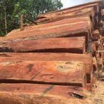 Những loại gỗ căm xe nào thường được dùng cho nội thất