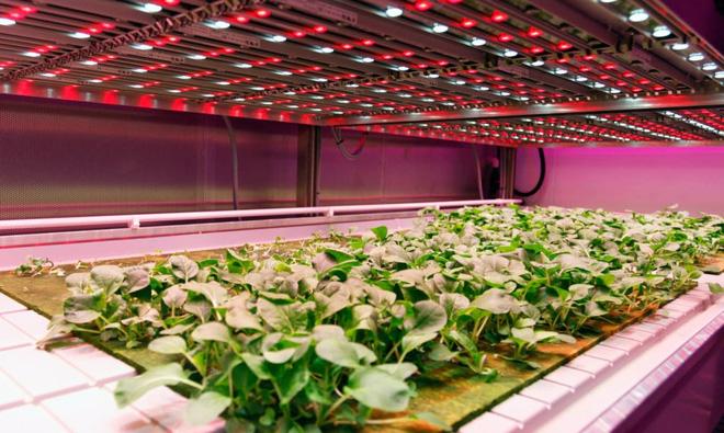 5 lý do sử dụng bông khoáng để trồng rau sạch